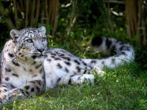 Magliaso Zoo